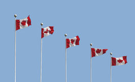 Five Canadian flags on poles isolated Stock Images