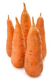Five carrots Stock Image