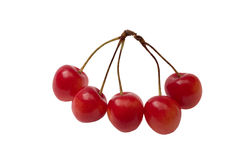 Five cherries. On white background Royalty Free Stock Photos