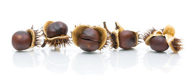 Five chestnuts in peel on a white background Stock Image