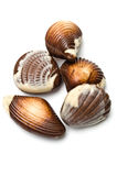 Five chocolate mollusk shaped Royalty Free Stock Image