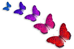 Five Color Butterflies Royalty Free Stock Images