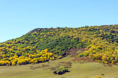 Five Color mountain autumn scenery Stock Photography