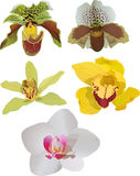 Five color orchids on white Royalty Free Stock Images