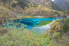Five colored lake, Jiuzhaigou, China. Five flower lake or Five colored lake in Jiuzhaigou national park, Sichuan, China Stock Images