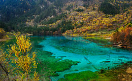 Five colored  lake Stock Photography
