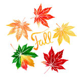 Five colorful autumn maple leaves watercolor Royalty Free Stock Photo