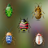 Five colorful beetles. Green background Royalty Free Stock Images