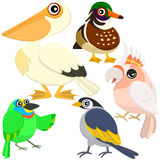 Five colorful cute birds Stock Photos