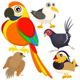 Five colorful cute birds Stock Image