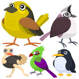 Five colorful cute birds Royalty Free Stock Image