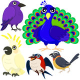 Five colorful cute birds Royalty Free Stock Images