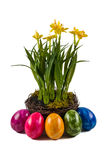 Easter eggs and daffodils. Five colorful easter eggs in front of a nest full of daffodils Royalty Free Stock Photography