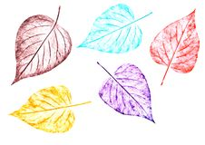 Five colorful leaves painted by hand on a white background.Hand drawing with crayons. Five colorful leaves painted by hand on a white background. A natural Royalty Free Stock Images