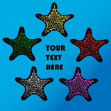 Five colorful starfish Royalty Free Stock Photo