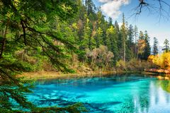 The Five Coloured Pool with azure water among woods. Fantastic view of the Five Coloured Pool (the Colorful Pond) with azure crystal clear water among woods in royalty free stock photography