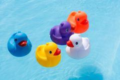 Five colourful rubber ducks, a family of ducks. Yellow, blue, purple and orange, swimming in the water in a paddling pool royalty free stock images