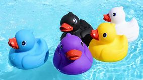 Five colourful rubber ducks floating relaxed and casually on the sparkling water stock video footage