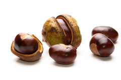 Five Conkers Stock Images