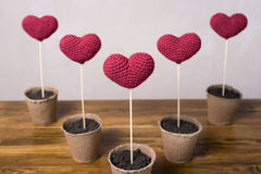 Five crocheted hearts in peat glasses Stock Photos