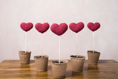 Five crocheted hearts in peat glasses Stock Photography