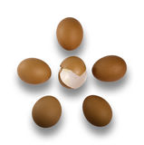 Five  crude brown eggs on a white background Stock Photography
