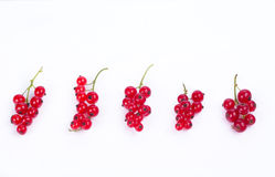 five Currant cluster Stock Photo