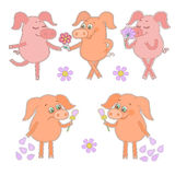 Five cute cartoon piglet stickers Happy and sad pigs with a flower in a hand. Five cute cartoon piglet stickers. Happy and sad pig with a flower in a hand Royalty Free Stock Photos