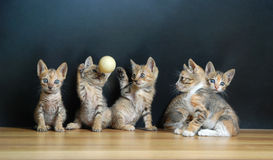 Five cute cats. With black background stock images