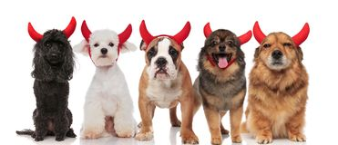 Five cute devil dogs of different breeds sitting and standing. On white background Stock Photos
