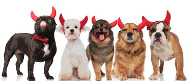 Five cute dogs with red devil horns standing and sitting. Five cute dogs of different breeds with red devil horns standing and sitting on white background Royalty Free Stock Image