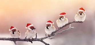 Five cute little birdies sitting in a fun Christmas hats on a br. Anch in winter, Sunny garden Royalty Free Stock Photography
