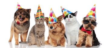 Five cute party pets with colorful caps royalty free stock image