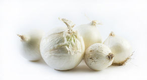 Five detailed white onions in different positions on a white background - composition Stock Photos