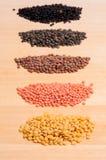 Five different lentils Stock Photo