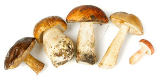 Five different mushrooms. Five different edible mushrooms on white background with shadows Stock Images