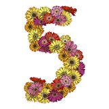 Five digit made of multicolored daisies flowers. Floral element of colorful alphabet made from flowers. Vector illustration Royalty Free Stock Photo