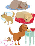Five dogs Stock Images
