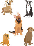 Five dogs Royalty Free Stock Images