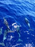 Five dolphins in deep blue water royalty free stock photos
