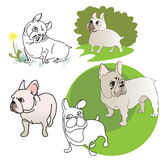 Five drawings of  French Bulldog Stock Image