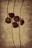 Five dried roses Royalty Free Stock Photo