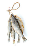 Five dried sea roach fishes on the rope Stock Photo