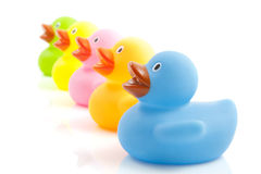 Five ducklings. Five colorful ducks in a row isolated over white Stock Images