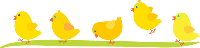Five Easter Chicken. Five yellow Easter Chicken  walk on the grass Stock Photography