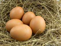 Five Egg on a haystack. Nest Stock Photo