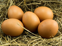 Five Eggs on a haystack. And nest Royalty Free Stock Photos