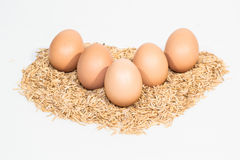 Five eggs with husk Royalty Free Stock Photo