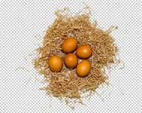 Five eggs lie in the nest, close-up, png royalty free stock photo