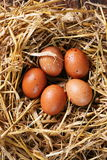 Five eggs in nest Royalty Free Stock Photo